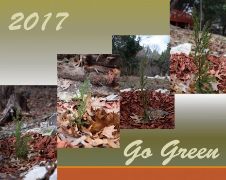 go-green-2017